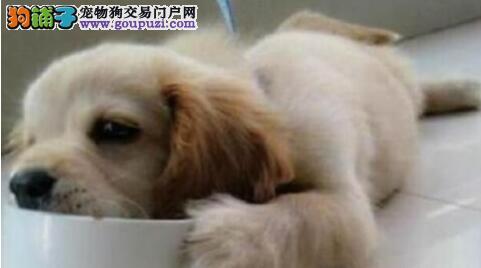 狗狗喂食需要注意的要点,请您注意查收