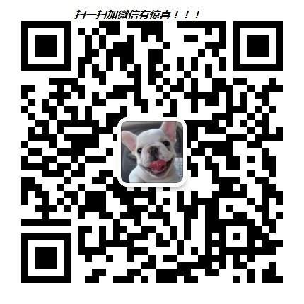 杭州哪里出售高加索高加索照片出售高加索