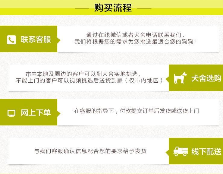 百分百健康纯种泰迪犬热卖中签订协议终身质保8