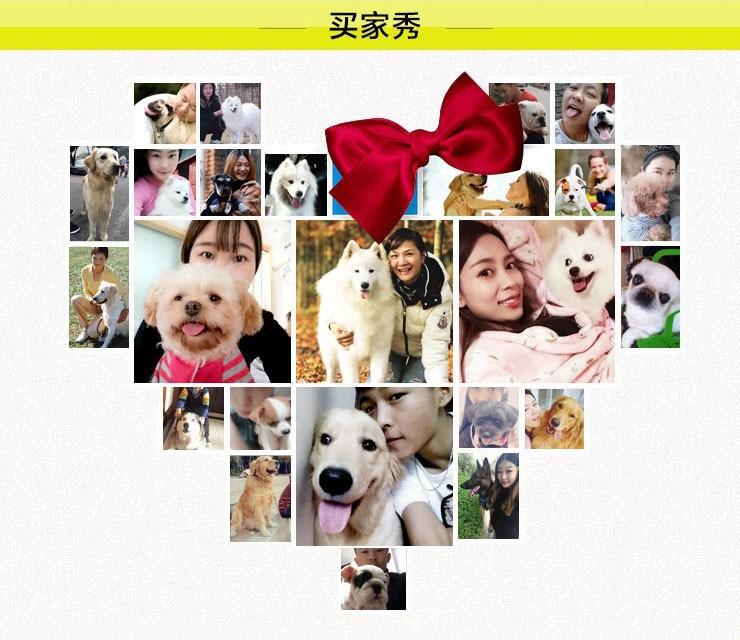 百分百健康纯种泰迪犬热卖中签订协议终身质保12