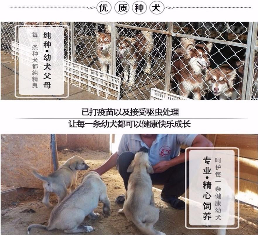 直销白松狮宝宝包健康包质量8