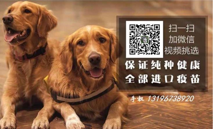 广州哪里有卖哈士奇 哈士奇价格 广州买哈士奇多少钱5