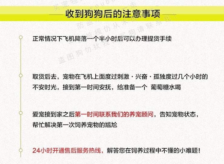 顶级优秀韩系青岛泰迪犬热销中 质量三包可签订协议