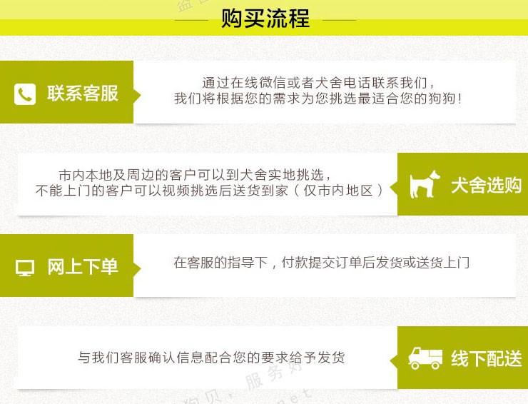 青岛实体店热卖拉布拉多颜色齐全提供护养指导