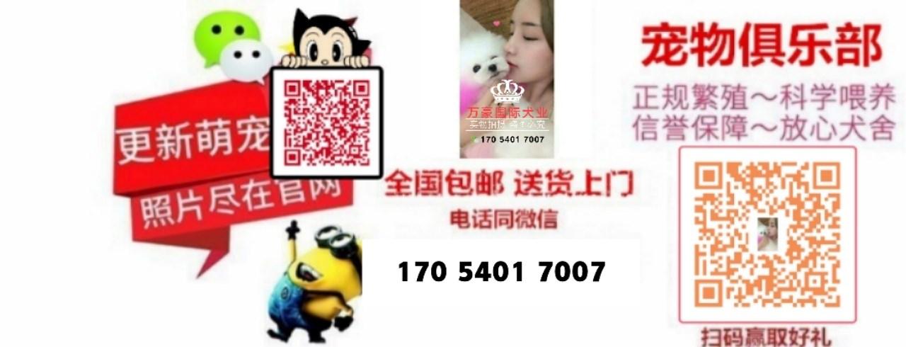 重庆出售可爱健康的博美犬喜欢的来 公母全部都有5