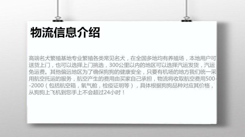 重庆出售可爱健康的博美犬喜欢的来 公母全部都有9