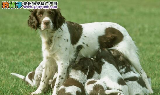 教你怎样挑选狗狗,并不是外表好看就够了