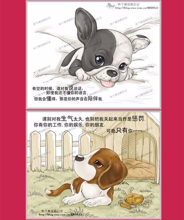 昆明大型犬舍出售萌萌哒哈士奇幼犬 疫苗齐全放心选购11