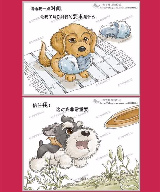 昆明大型犬舍出售萌萌哒哈士奇幼犬 疫苗齐全放心选购10