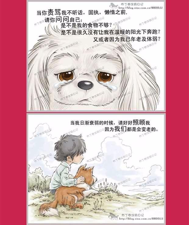 昆明大型犬舍出售萌萌哒哈士奇幼犬 疫苗齐全放心选购13