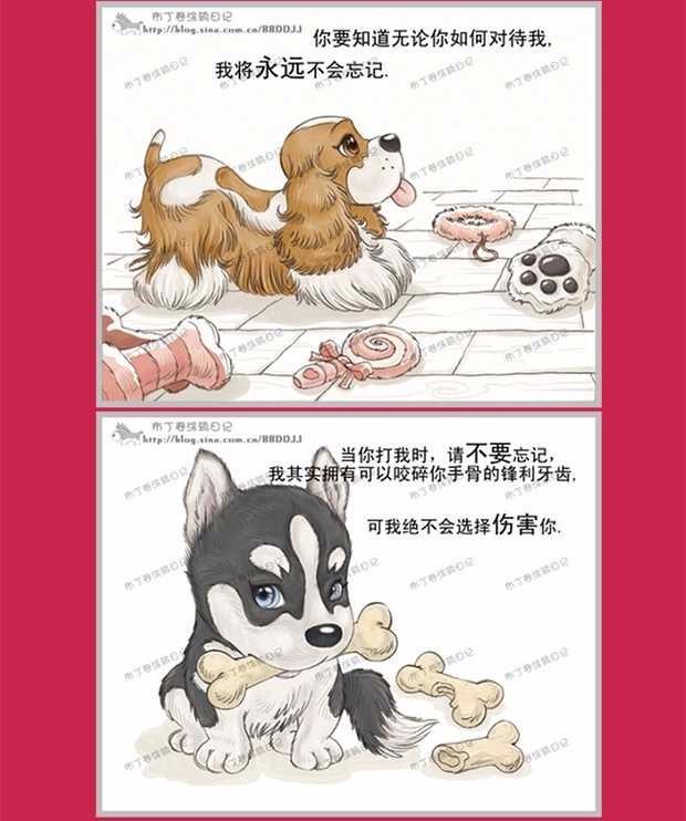 昆明大型犬舍出售萌萌哒哈士奇幼犬 疫苗齐全放心选购12