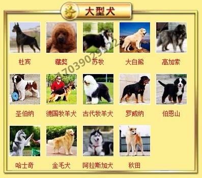 出售聪明伶俐天津泰迪犬品相极佳包养活送用品8