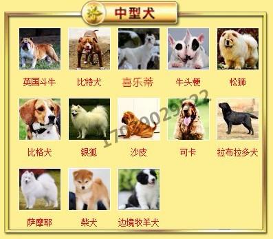 出售聪明伶俐天津泰迪犬品相极佳包养活送用品7