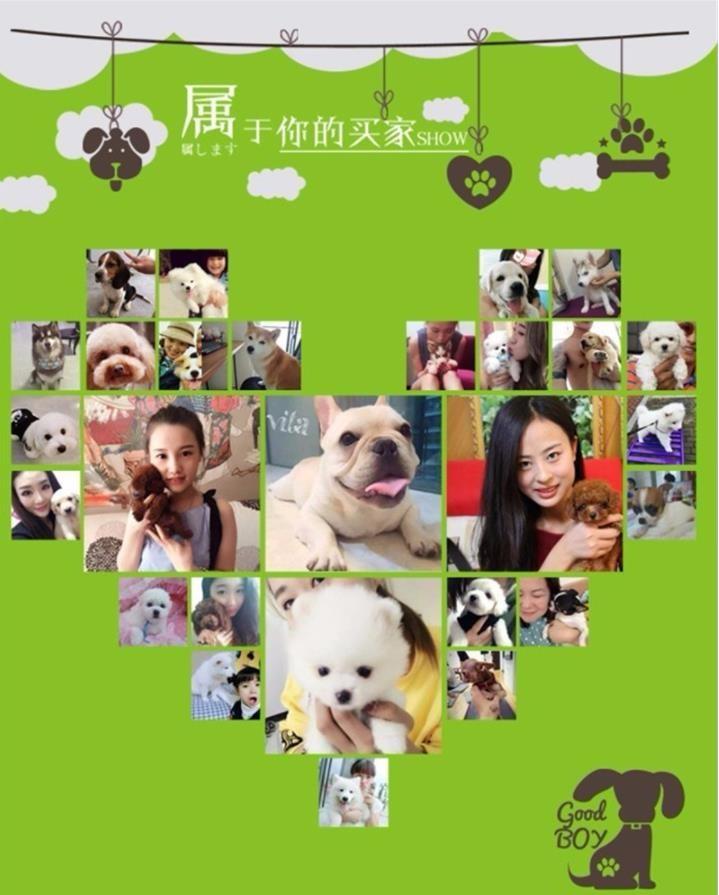 北京养殖场直销完美品相的高加索微信咨询看狗狗照片7