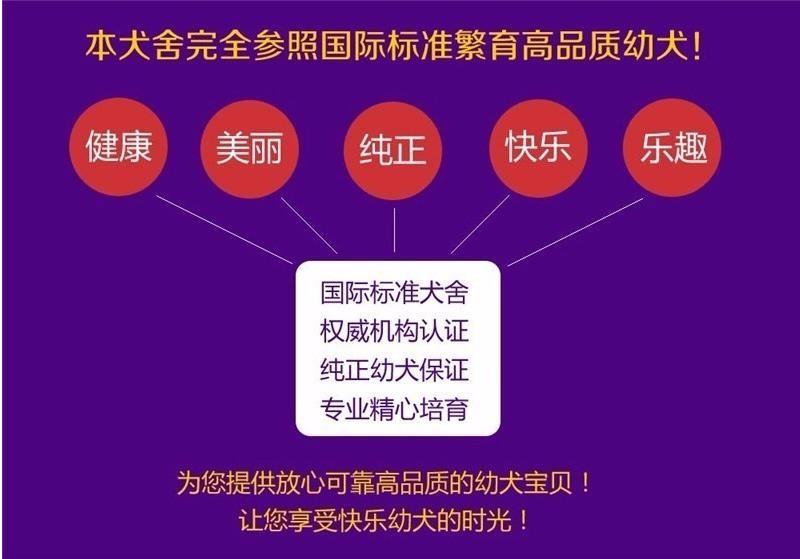 北京养殖场直销完美品相的高加索微信咨询看狗狗照片9