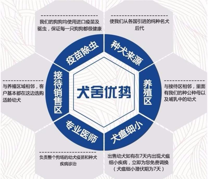 北京养殖场直销完美品相的高加索微信咨询看狗狗照片8