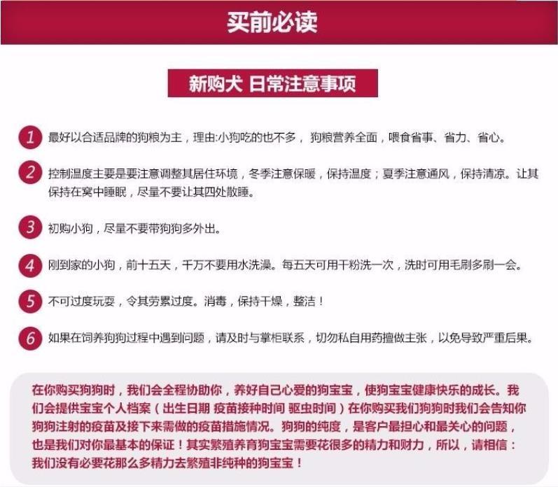 北京养殖场直销完美品相的高加索微信咨询看狗狗照片10