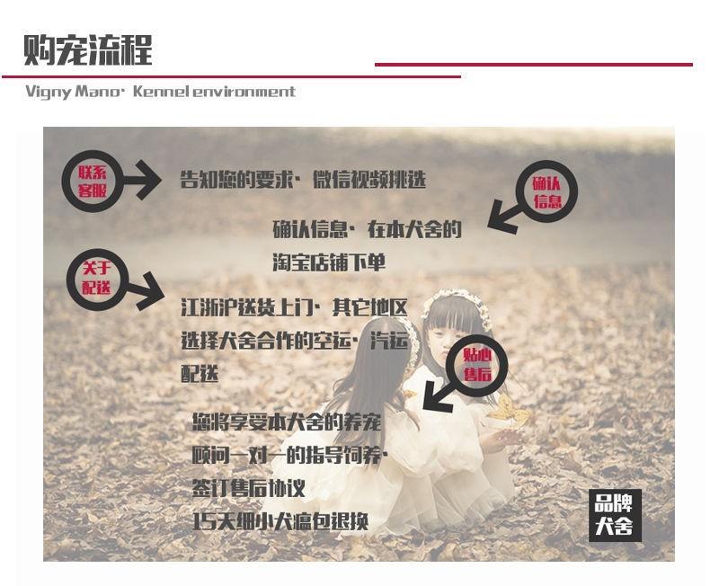 100%纯种健康的营口纽芬兰犬出售欢迎您的指导9