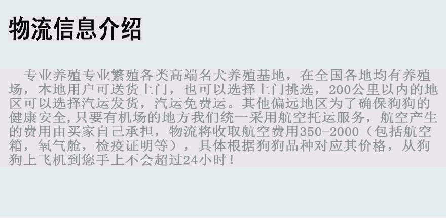 大骨架高加索犬青岛狗场火爆热卖 可支持空运可视频9