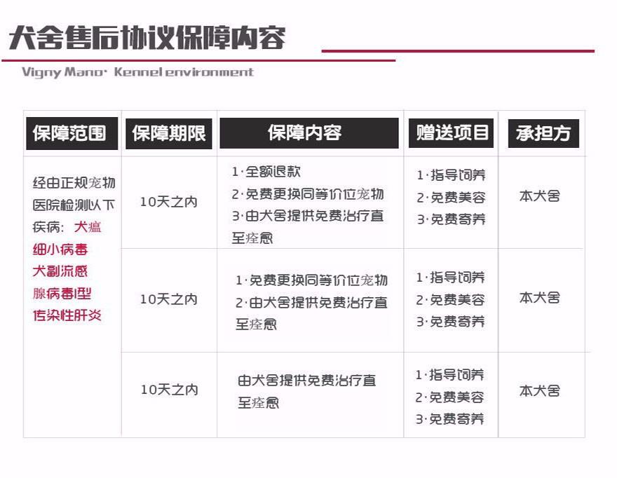 青岛市出售杜宾犬幼犬 疫苗齐全 协议质保 可上门选购10