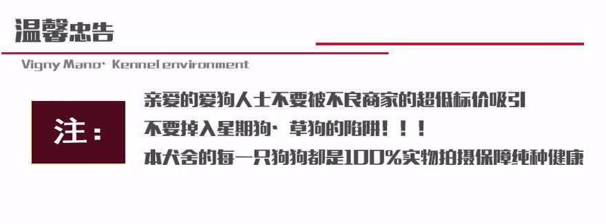 大骨架高加索犬青岛狗场火爆热卖 可支持空运可视频14