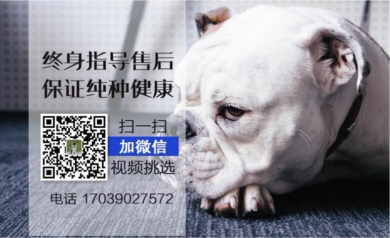 杭州哪里出售高加索高加索照片出售高加索5