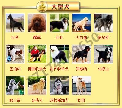 邢台犬舍繁殖纯种泰迪犬品质保证签协议可视频挑选可换8