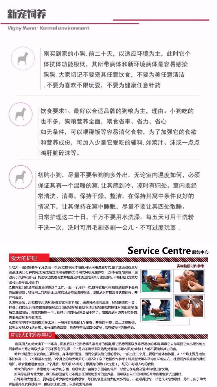 邢台犬舍繁殖纯种泰迪犬品质保证签协议可视频挑选可换15