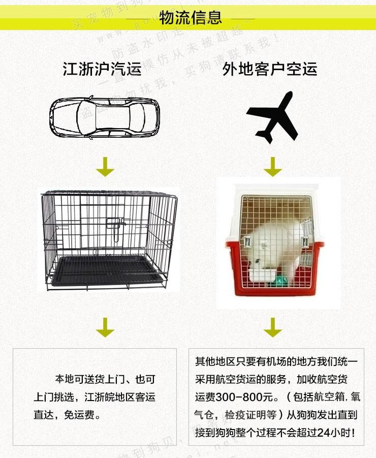 武汉实体店出售纯种泰迪犬多只健康可见狗狗父母11