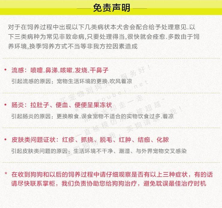 武汉实体店出售纯种泰迪犬多只健康可见狗狗父母14