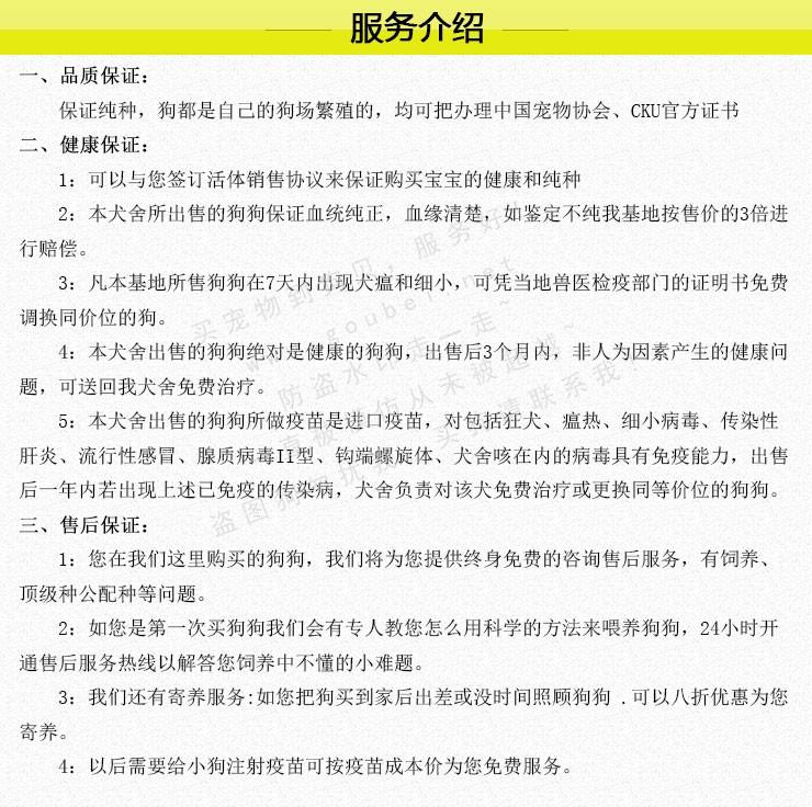 武汉实体店出售纯种泰迪犬多只健康可见狗狗父母8