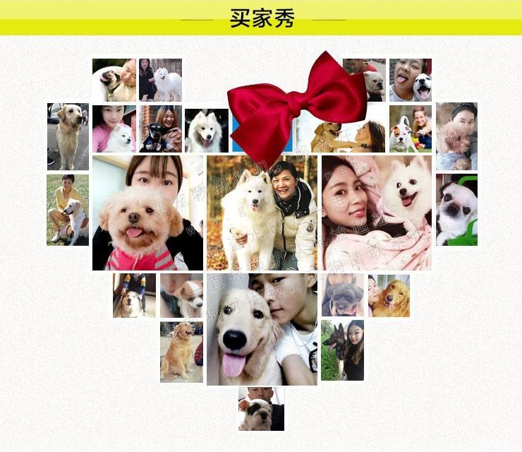 武汉实体店出售纯种泰迪犬多只健康可见狗狗父母13