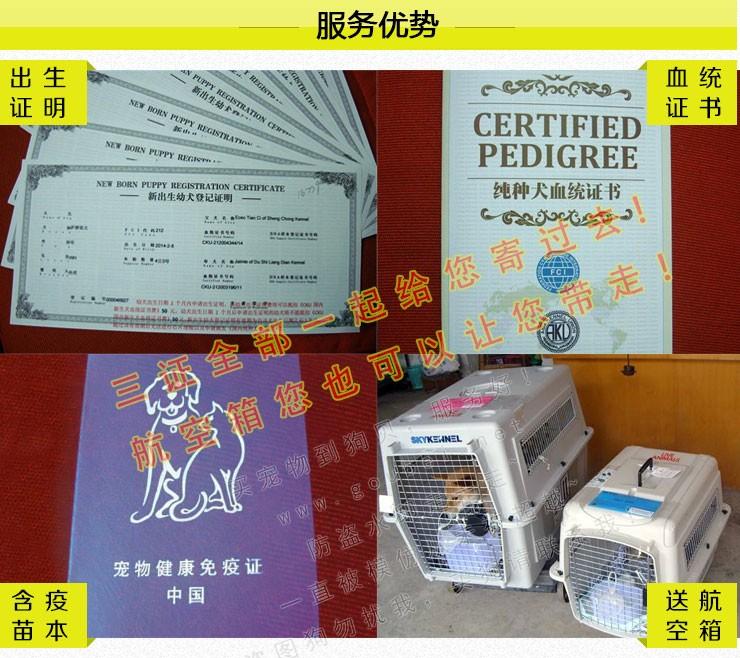 武汉实体店出售纯种泰迪犬多只健康可见狗狗父母9