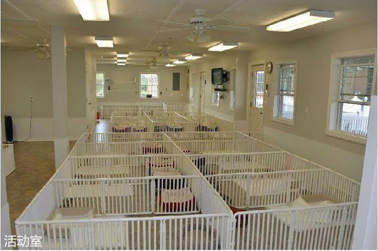 提防低价骗局 正规养殖场直销 常州买罗威纳犬必选7