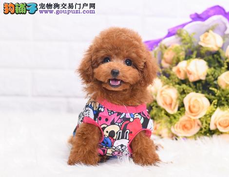 当下最流行的泰迪玩具体的棕色泰迪宝宝最畅销1