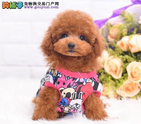 当下最流行的泰迪玩具体的棕色泰迪宝宝最畅销2