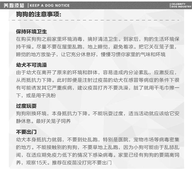 杭州基地出售大骨架高加索犬保健康质保终身12