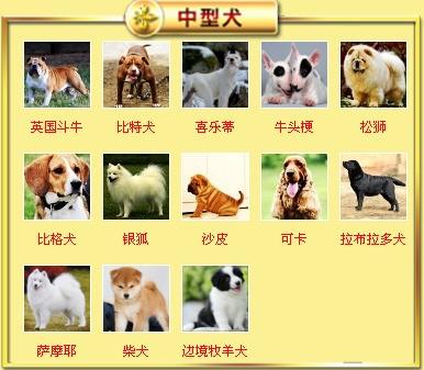 杭州基地出售大骨架高加索犬保健康质保终身7