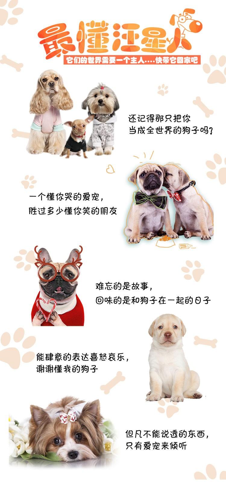 专业正规犬舍热卖优秀昆明犬保证冠军级血统7