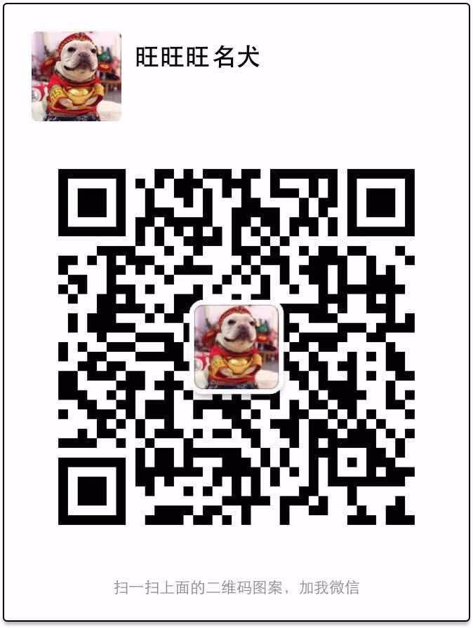 重庆出售极品泰迪犬幼犬完美品相可签合同刷卡5