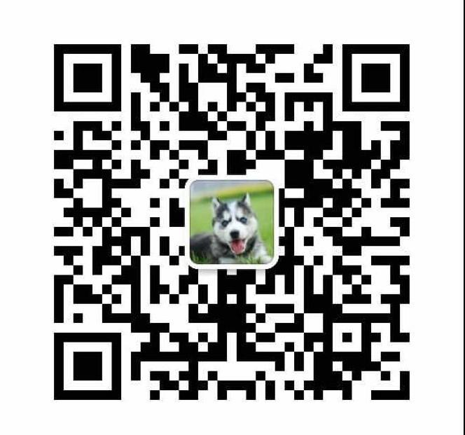 自家繁殖茶杯犬出售公母都有支持全国空运发货16