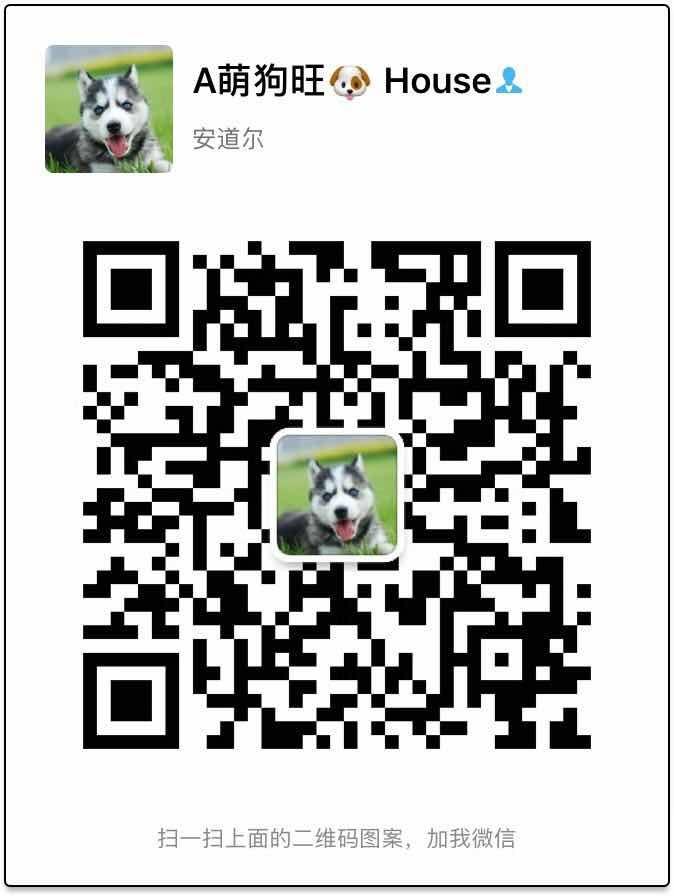 上海哪里出售腊肠犬 腊肠犬价格多少5