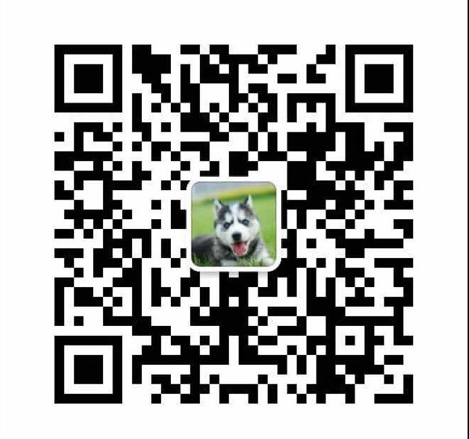 上海哪里出售腊肠犬 腊肠犬价格多少17