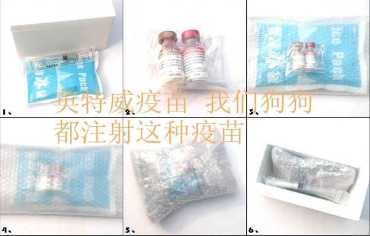 天津精品玩具爆红色泰迪熊宝宝出售6