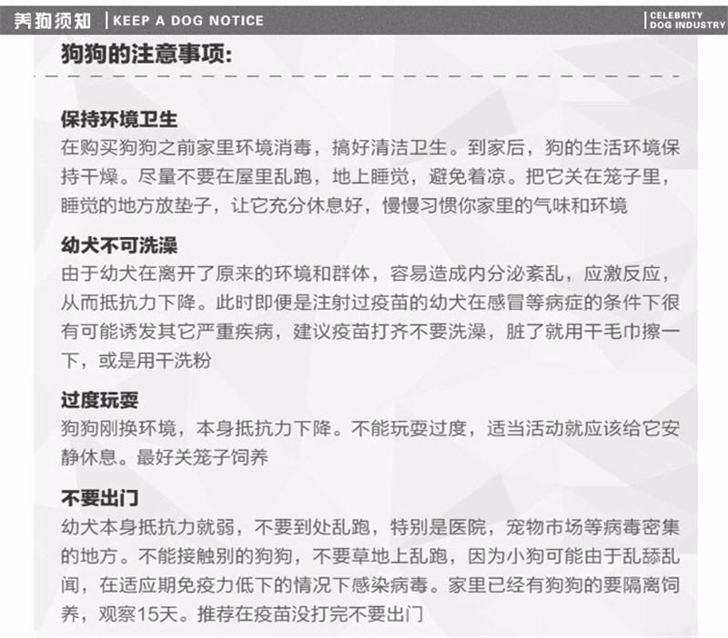 南京哪里出售古牧 古代牧羊犬出售 古牧照片7