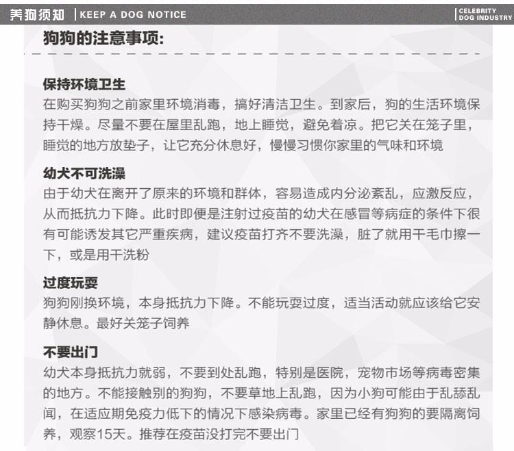 顶级优秀雪纳瑞特价直销中 南宁周边可送外地可办空运9