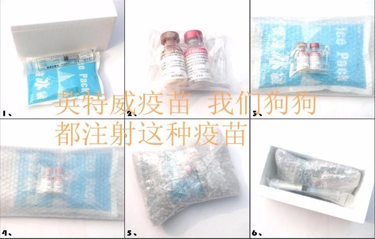 自然卷卷武汉家养玩具巧克力、奶牛花色泰迪特价出售7