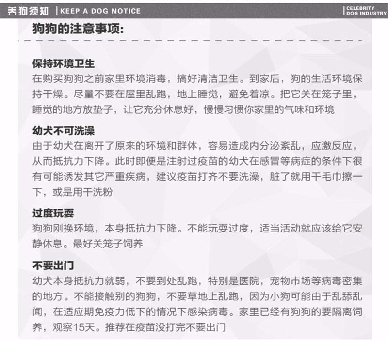 天津本地出售高品质泰迪犬宝宝赛级品质血统保障12