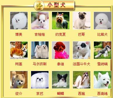 自家繁殖泰迪犬出售公母都有诚信经营良心售后6