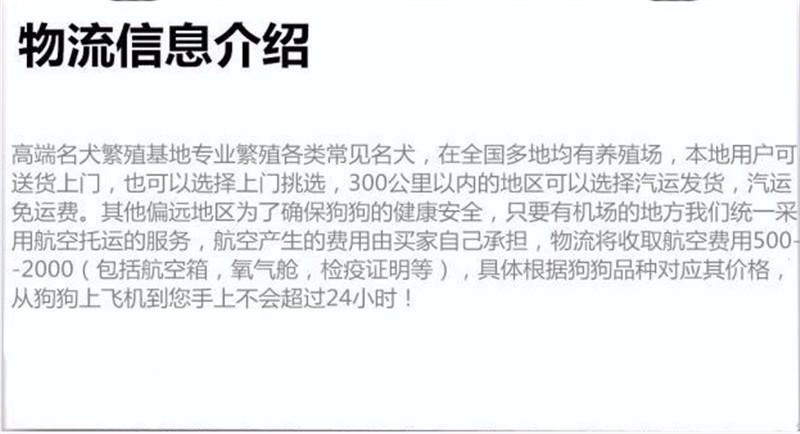 重庆纯种泰迪熊幼犬热售中 签协议送用品可送货上门8